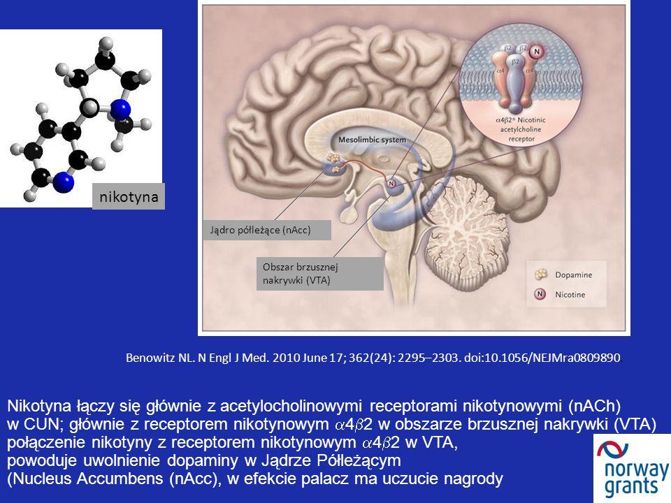 Benowitz NL. N Engl J Med. 2010 June 17; 362(24): 2295–2303. doi:10.1056/NEJMra0809890. Nikotyna łączy się głównie z acetylocholinowymi receptorami ni