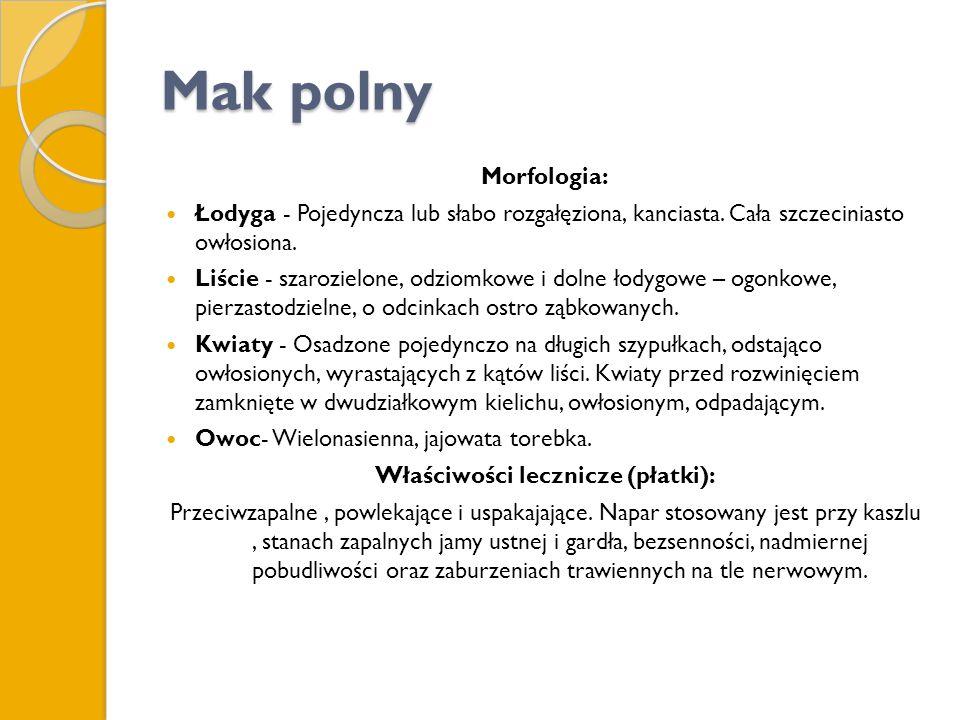 Mak polny Morfologia: Łodyga - Pojedyncza lub słabo rozgałęziona, kanciasta. Cała szczeciniasto owłosiona. Liście - szarozielone, odziomkowe i dolne ł