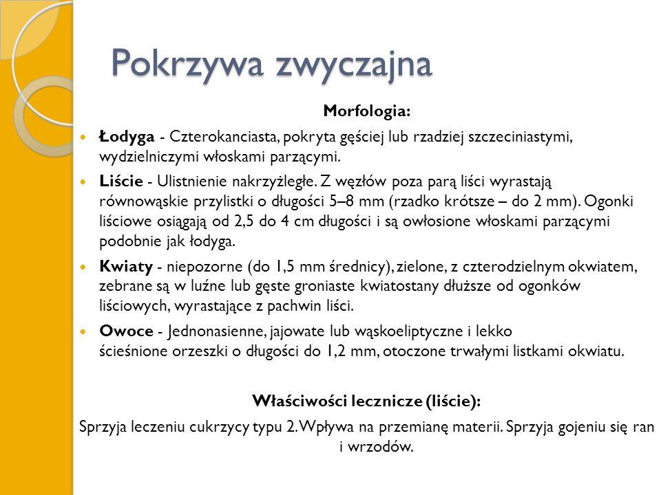Pokrzywa zwyczajna Morfologia: Łodyga - Czterokanciasta, pokryta gęściej lub rzadziej szczeciniastymi, wydzielniczymi włoskami parzącymi. Liście - Uli