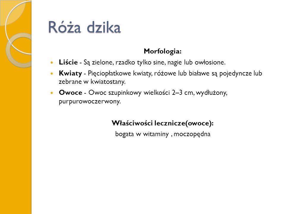 Róża dzika Morfologia: Liście - Są zielone, rzadko tylko sine, nagie lub owłosione.