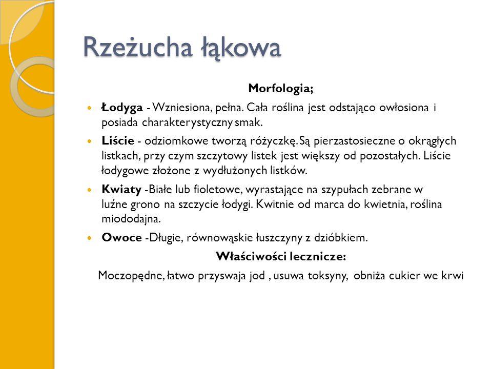 Rzeżucha łąkowa Morfologia; Łodyga - Wzniesiona, pełna. Cała roślina jest odstająco owłosiona i posiada charakterystyczny smak. Liście - odziomkowe tw