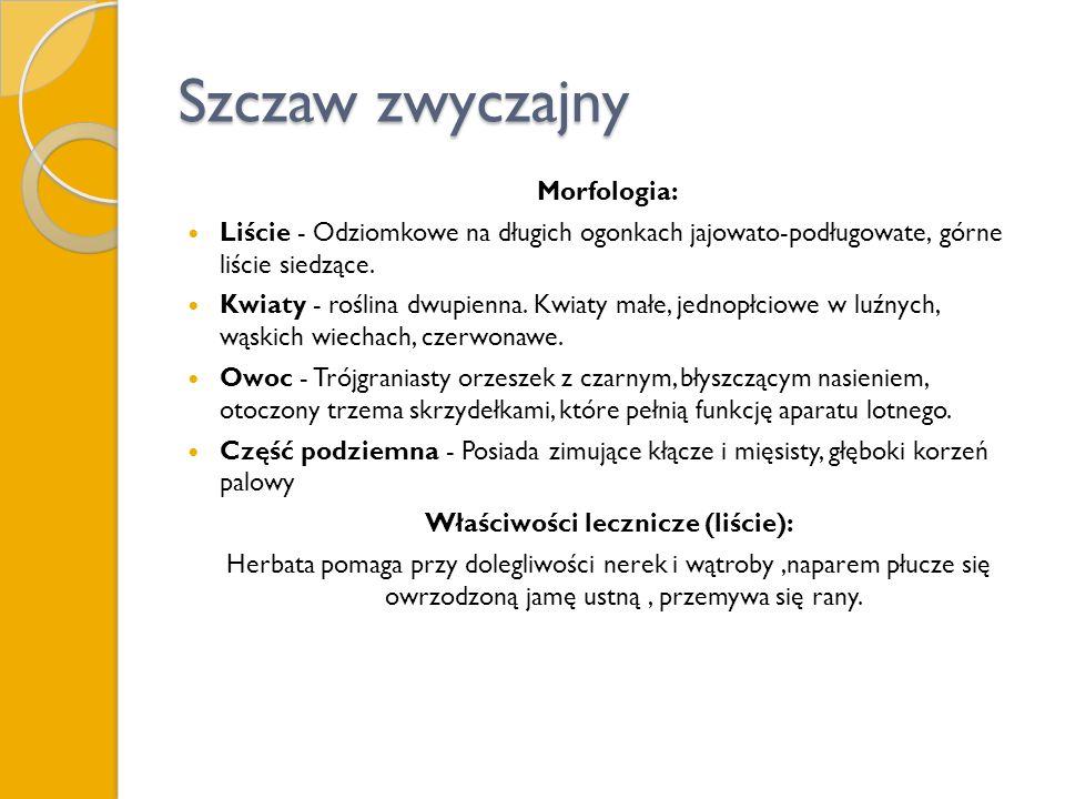 Szczaw zwyczajny Morfologia: Liście - Odziomkowe na długich ogonkach jajowato-podługowate, górne liście siedzące. Kwiaty - roślina dwupienna. Kwiaty m