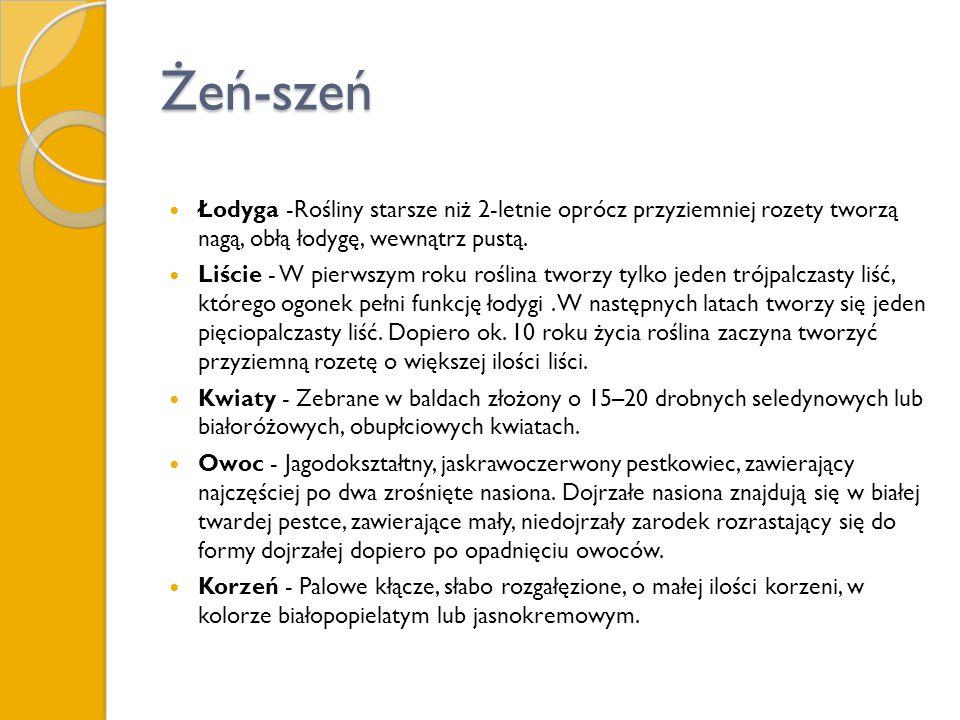Żeń-szeń Łodyga -Rośliny starsze niż 2-letnie oprócz przyziemniej rozety tworzą nagą, obłą łodygę, wewnątrz pustą. Liście - W pierwszym roku roślina t