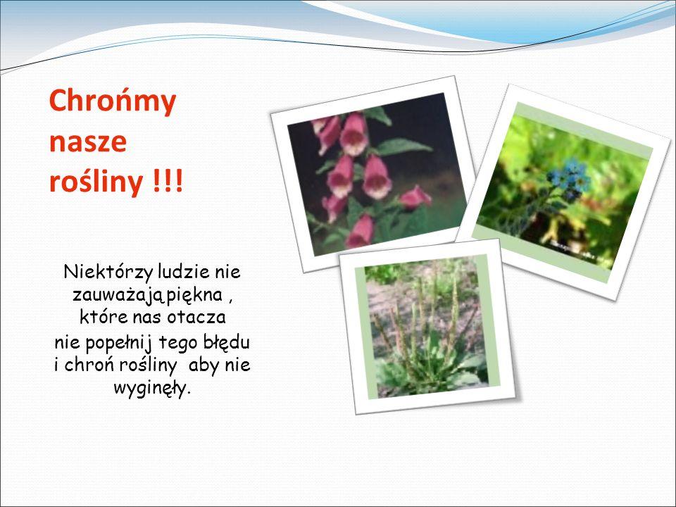 Chrońmy nasze rośliny !!.