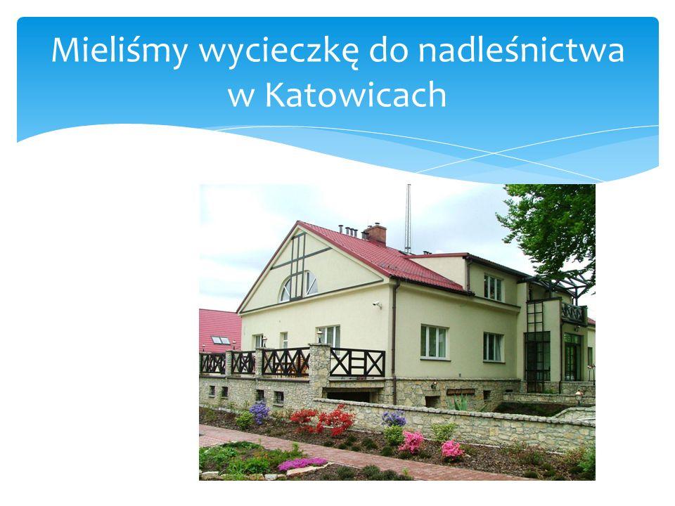 Mieliśmy wycieczkę do nadleśnictwa w Katowicach