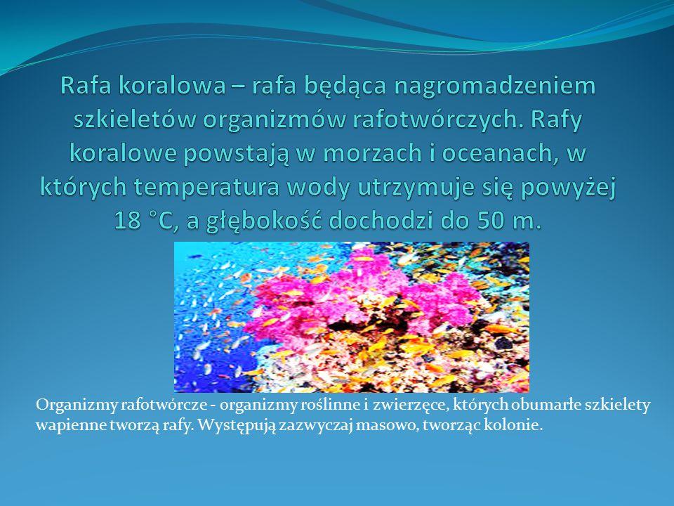 Organizmy rafotwórcze - organizmy roślinne i zwierzęce, których obumarłe szkielety wapienne tworzą rafy. Występują zazwyczaj masowo, tworząc kolonie.