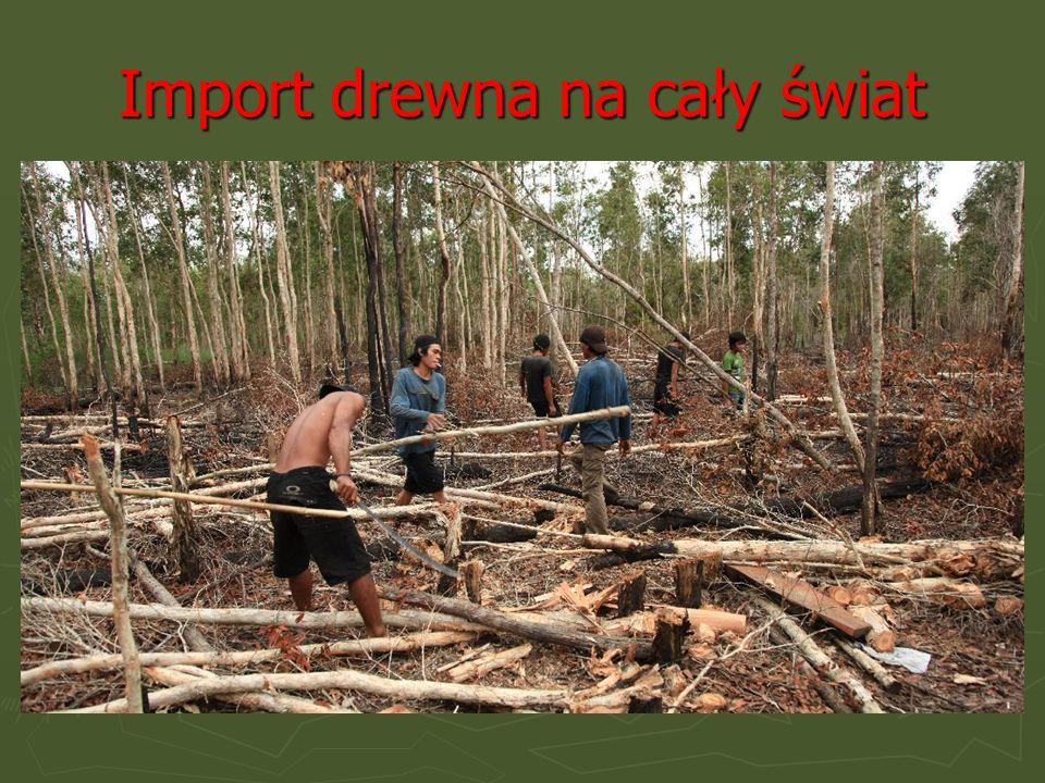Główne przyczyny niszczenia lasów Amazonii: - Import drewna na cały świat - Rolnictwo i Pasterstwo - Eksploatacja złóż mineralnych - Rozwija się przem