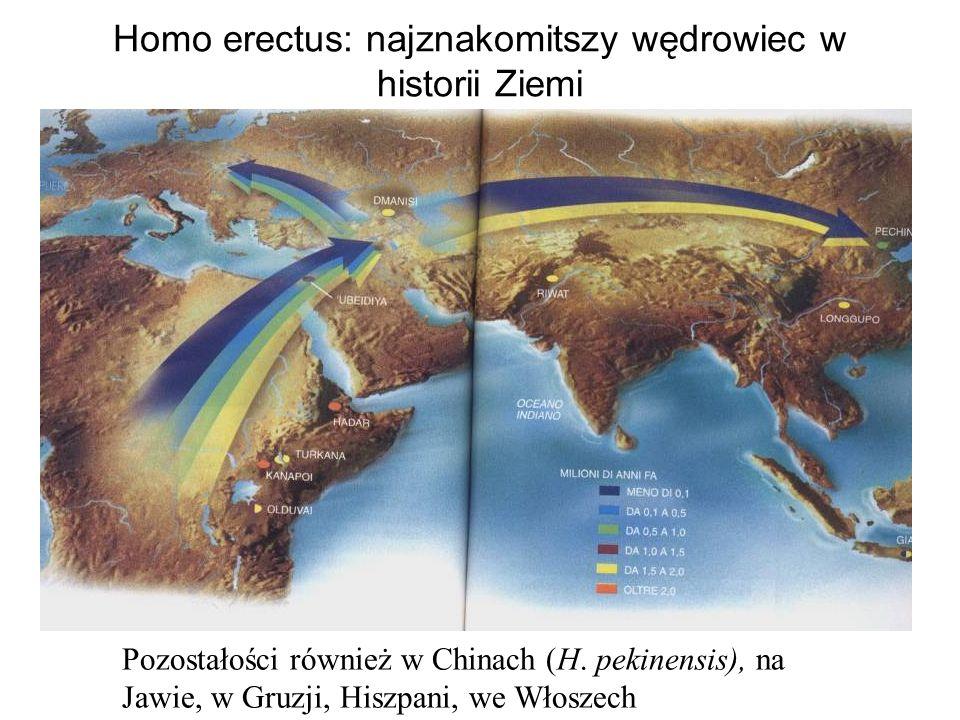 Homo erectus: najznakomitszy wędrowiec w historii Ziemi Pozostałości również w Chinach (H.