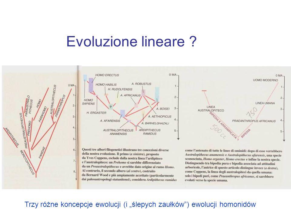 """Evoluzione lineare Trzy różne koncepcje ewolucji (i """"ślepych zaułków ) ewolucji homonidów"""