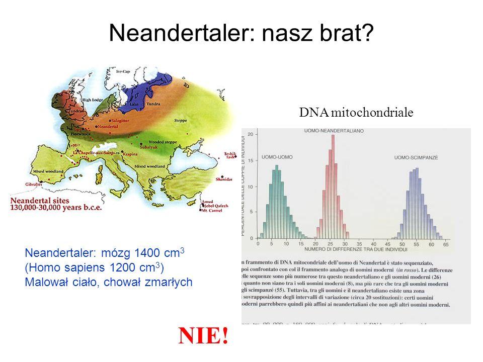 Neandertaler: nasz brat. DNA mitochondriale NIE.