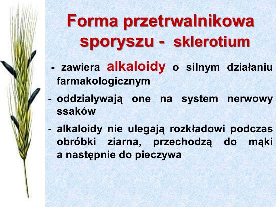 Forma przetrwalnikowa sporyszu - sklerotium - zawiera alkaloidy o silnym działaniu farmakologicznym -oddziaływają one na system nerwowy ssaków -alkaloidy nie ulegają rozkładowi podczas obróbki ziarna, przechodzą do mąki a następnie do pieczywa