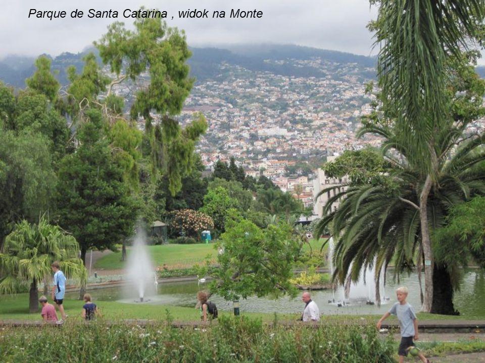 Taras w Parque de Santa Catarina