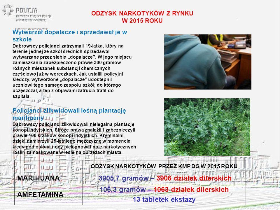 ODZYSK NARKOTYKÓW Z RYNKU W 2015 ROKU Policjanci zlikwidowali leśną plantację marihuany Dąbrowscy policjanci zlikwidowali nielegalną plantację konopi