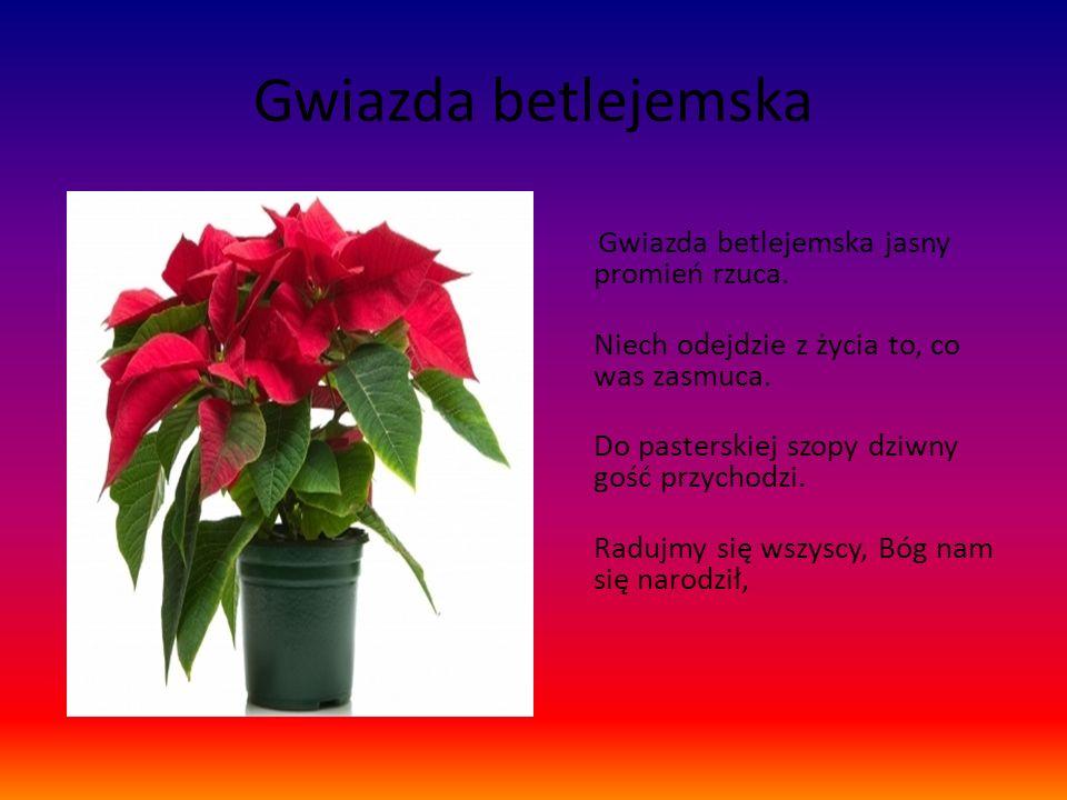 Gwiazda betlejemska Gwiazda betlejemska jasny promień rzuca.