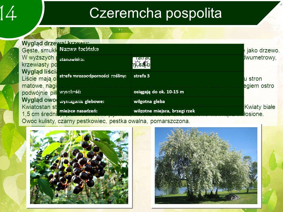 Czeremcha pospolita 14 Nazwa łacińska stanowisko: strefa mrozoodporności rośliny:strefa 3 wysokość:osiągają do ok.