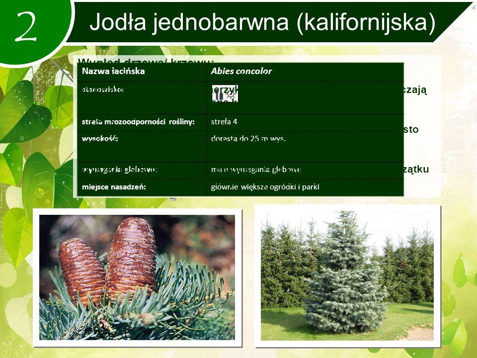 2 Jodła jednobarwna (kalifornijska) Nazwa łacińskaAbies concolor stanowisko: strefa mrozoodporności rośliny:strefa 4 wysokość:dorasta do 25 m wys.