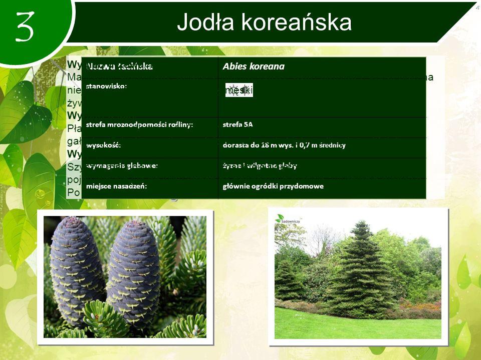 3 Jodła koreańska Nazwa łacińskaAbies koreana stanowisko: strefa mrozoodporności rośliny:strefa 5A wysokość:dorasta do 18 m wys.