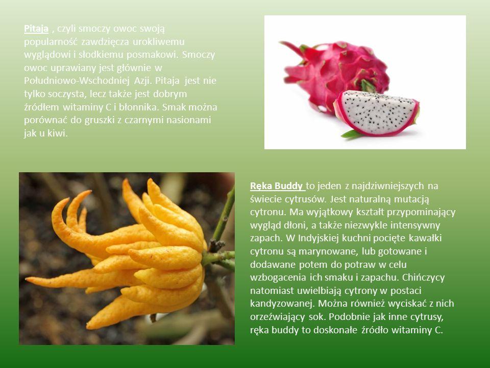 Pitaja, czyli smoczy owoc swoją popularność zawdzięcza urokliwemu wyglądowi i słodkiemu posmakowi. Smoczy owoc uprawiany jest głównie w Południowo-Wsc