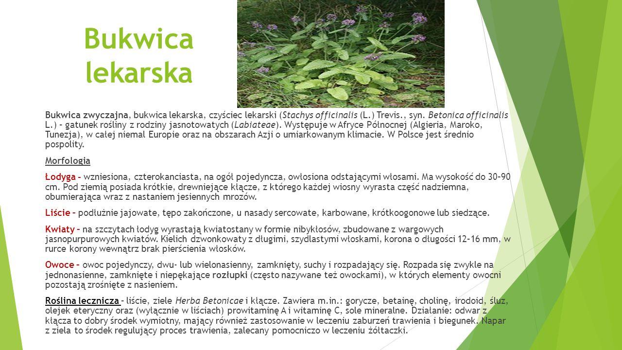 Bylica pospolita (Artemisia vulgaris L.) – gatunek rośliny z rodziny astrowatych.