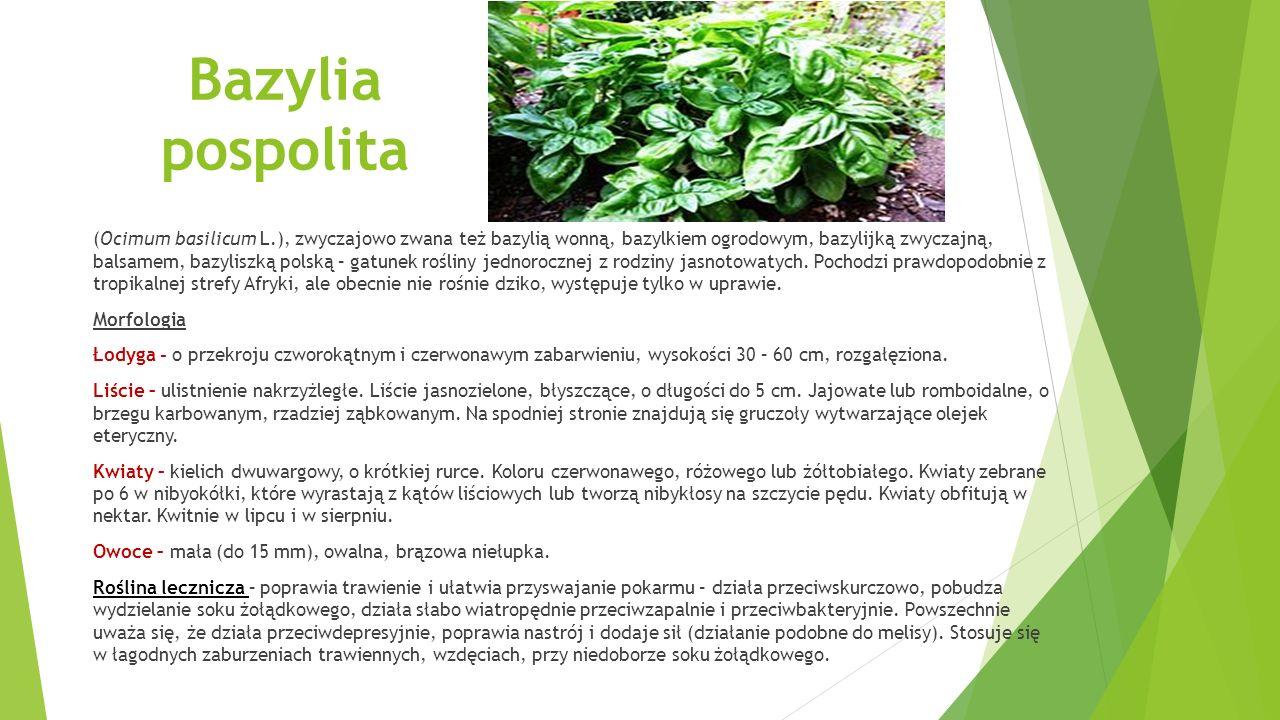 Bazylia pospolita (Ocimum basilicum L.), zwyczajowo zwana też bazylią wonną, bazylkiem ogrodowym, bazylijką zwyczajną, balsamem, bazyliszką polską – gatunek rośliny jednorocznej z rodziny jasnotowatych.