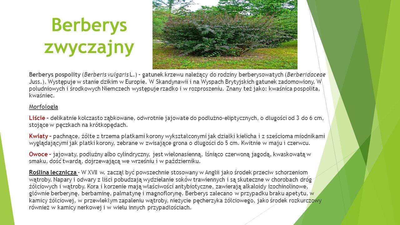 Berberys zwyczajny Berberys pospolity (Berberis vulgaris L.) – gatunek krzewu należący do rodziny berberysowatych (Berberidaceae Juss.).