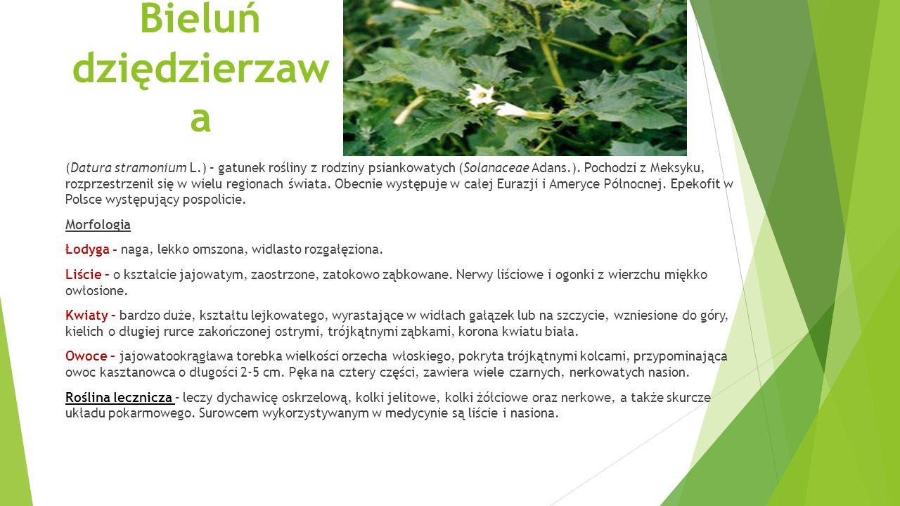 Bluszcz pospolity (Hedera helix L.) – gatunek wiecznie zielonego pnącza należący do rodziny araliowatych (Araliaceae).