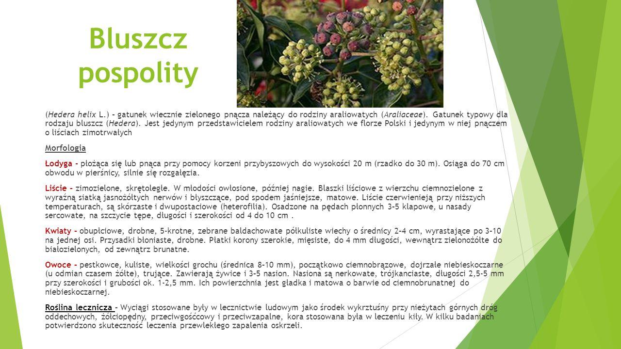 Chinowiec (Cinchona L.) – rodzaj roślin z rodziny marzanowatych (Rubiaceae).