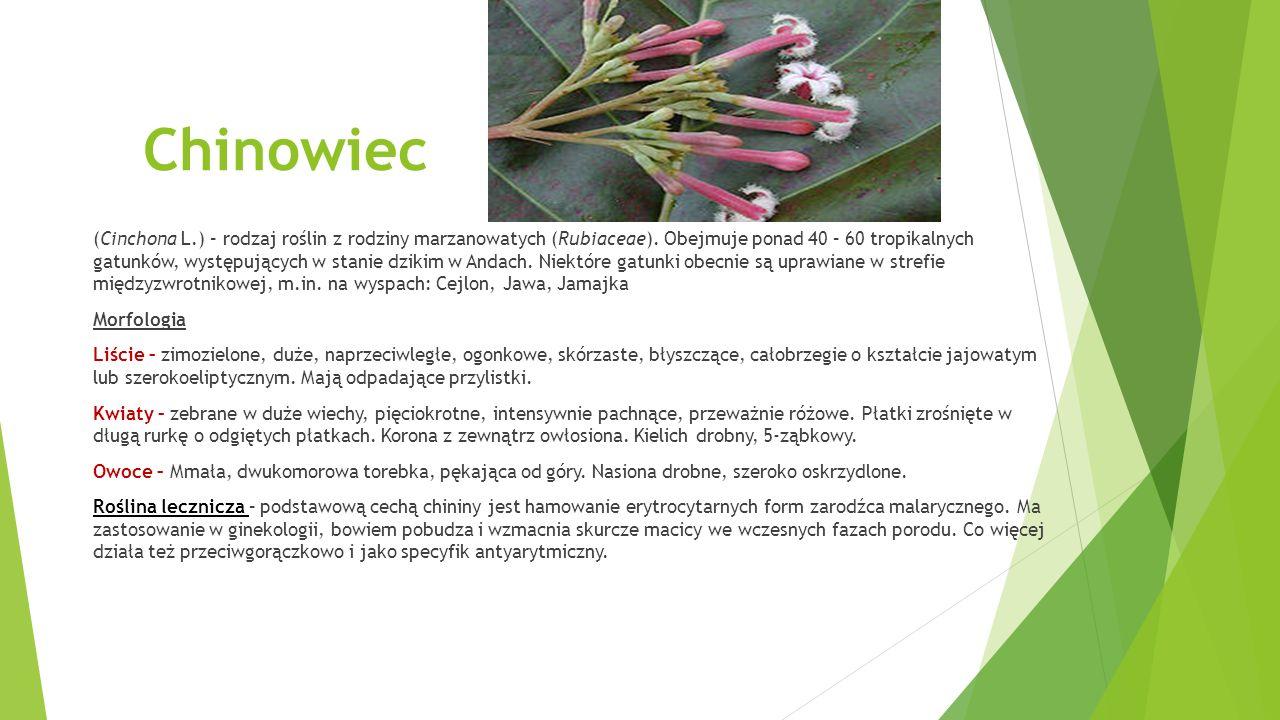 Bodziszek cuchnący (Geranium robertianum L.) – gatunek rośliny z rodziny bodziszkowatych.