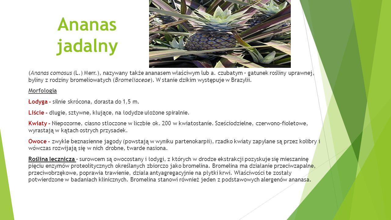 Alpinia lekarska (Alpinia officinarum Hance), nazywana także gałgantem chińskim lub gałgantem wielkim – gatunek roślin z rodziny imbirowatych.