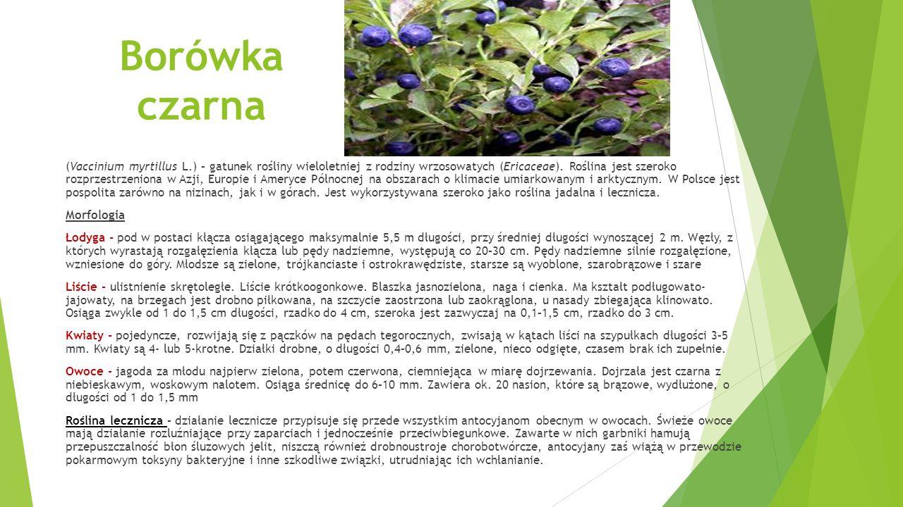 Borówka czarna (Vaccinium myrtillus L.) – gatunek rośliny wieloletniej z rodziny wrzosowatych (Ericaceae).