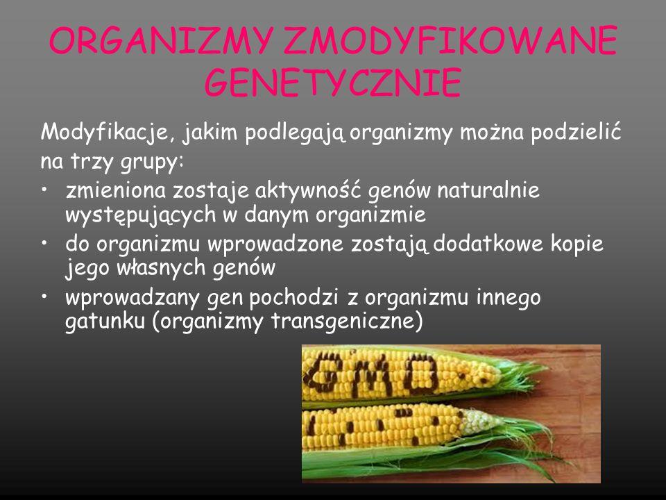 Rośliny transgeniczne GMO - przykłady modyfikacji Modyfikowane genetycznie są głównie rośliny mające duże znaczenie gospodarcze Modyfikuje się także rośliny ozdobne, które dzięki temu są trwalsze, mają intensywniejszy kolor Zmodyfikowane genetycznie zostało większość roślin mających znaczenia dla człowieka