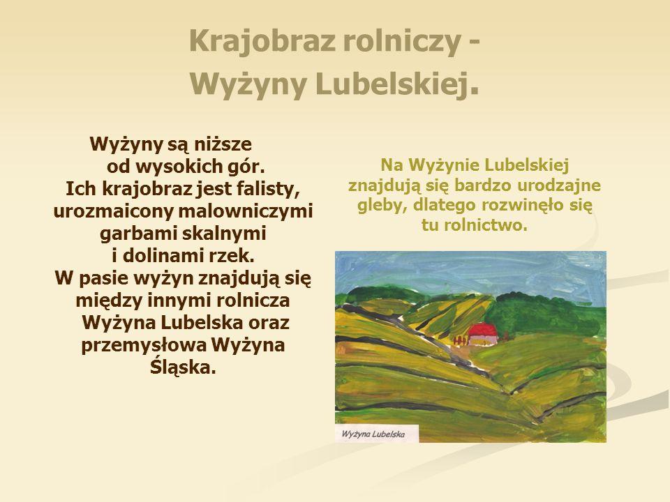 Krajobraz rolniczy - Wyżyny Lubelskiej. Wyżyny są niższe od wysokich gór. Ich krajobraz jest falisty, urozmaicony malowniczymi garbami skalnymi i doli