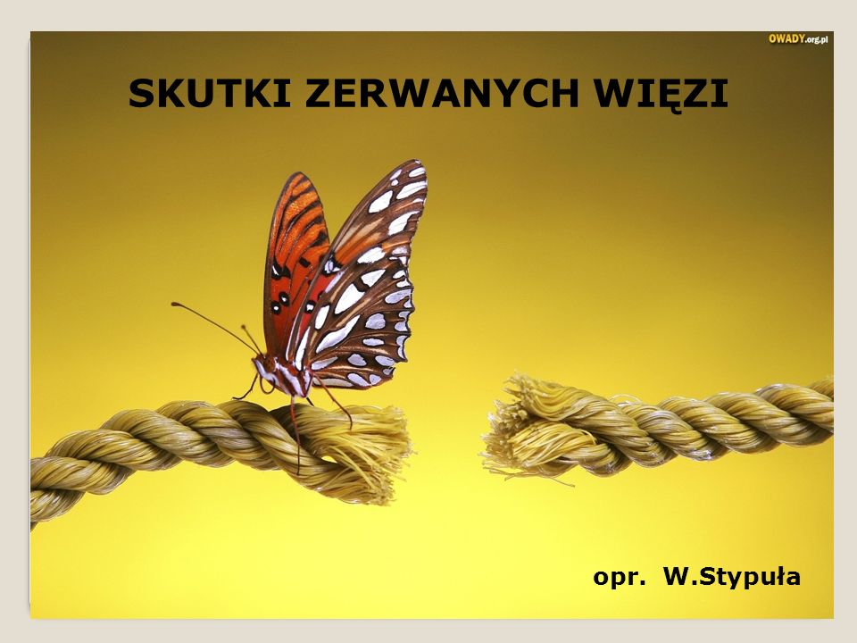 SKUTKI ZERWANYCH WIĘZI opr. W.Stypuła