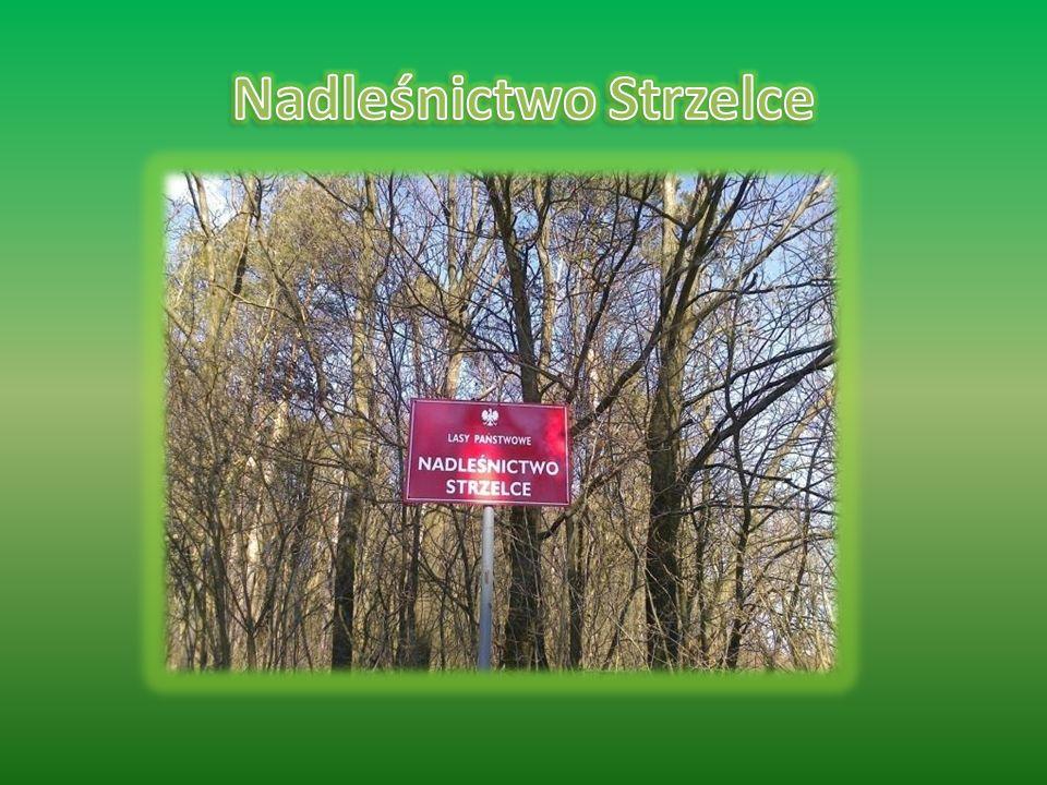  Nadleśnictwo Strzelce położone jest w południowo- wschodniej części województwa lubelskiego  Nadleśnictwo od północy graniczy z Nadleśnictwem Chełm, od zachodu - Nadleśnictwem Krasnystaw, od południa Mircze i Tomaszów.