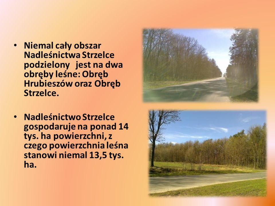 Niemal cały obszar Nadleśnictwa Strzelce podzielony jest na dwa obręby leśne: Obręb Hrubieszów oraz Obręb Strzelce. Nadleśnictwo Strzelce gospodaruje