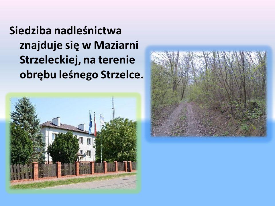 Siedziba nadleśnictwa znajduje się w Maziarni Strzeleckiej, na terenie obrębu leśnego Strzelce.
