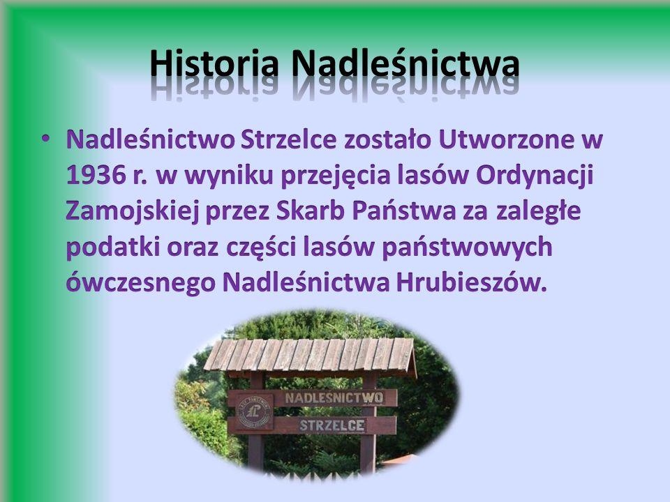 W kompleksie Lasów Strzeleckich utworzono dwa częściowe rezerwaty ochrony przyrody: rezerwat Liski i rezerwat Siedliszcze.