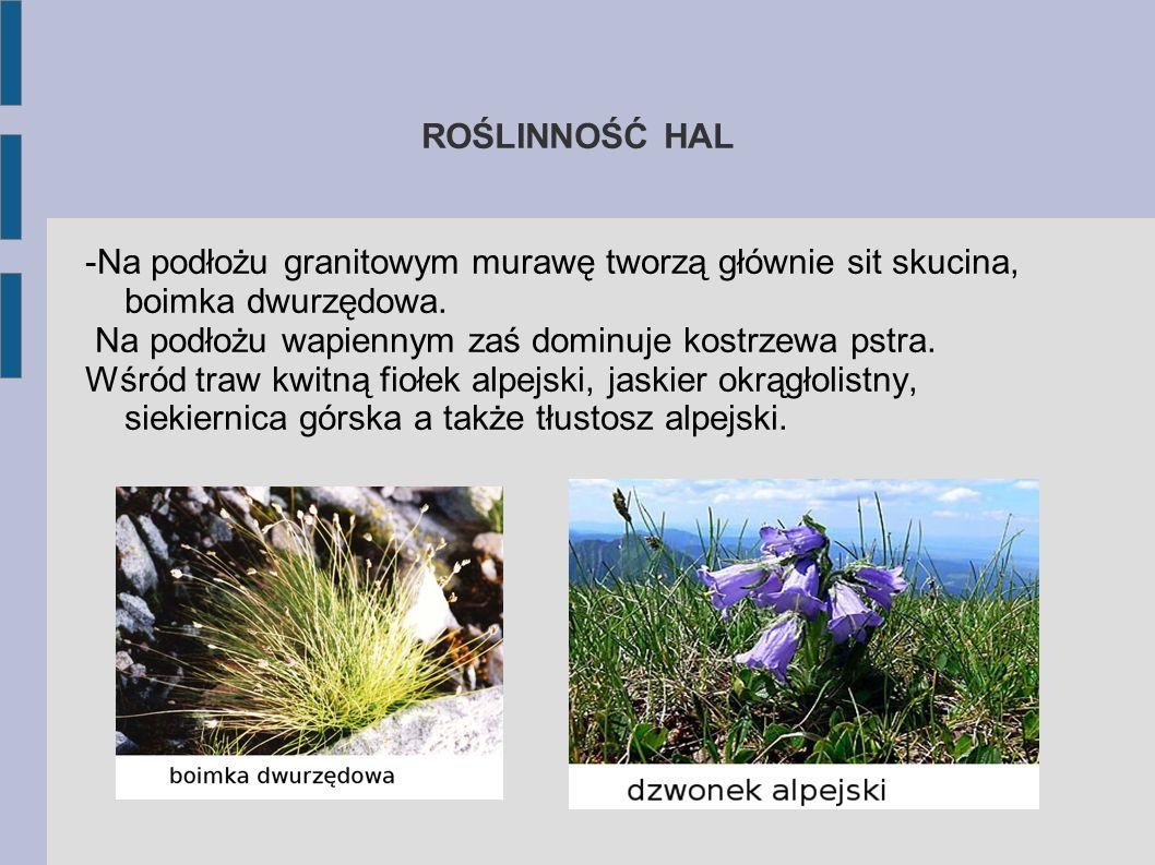 Hale Piętro hal jest niegościnnym terenem dla roślin. Są tam łąki wysokogórskie z trawą, sitowiem i turzycą. Można też spotkać zioła, czasami krzewink