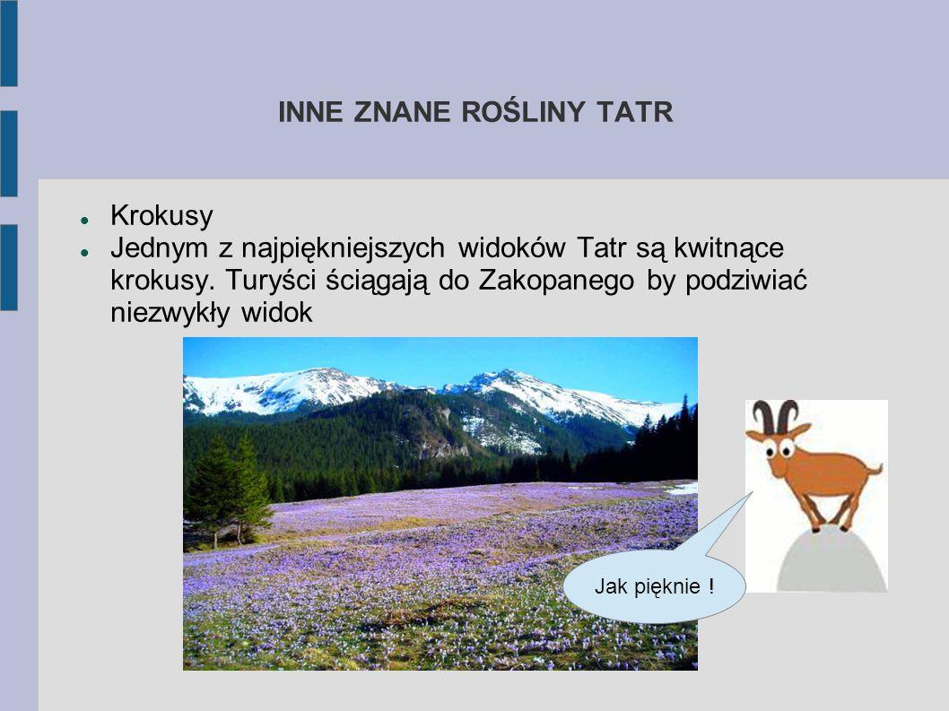 NAJBARDZIEJ ZNANE ROŚLINY TATR Rośliną najbardziej kojarzoną z Tatrami poza limbą jest oczywiście szarotka alpejska. Stanowi jeden z symboli Tatrzańsk