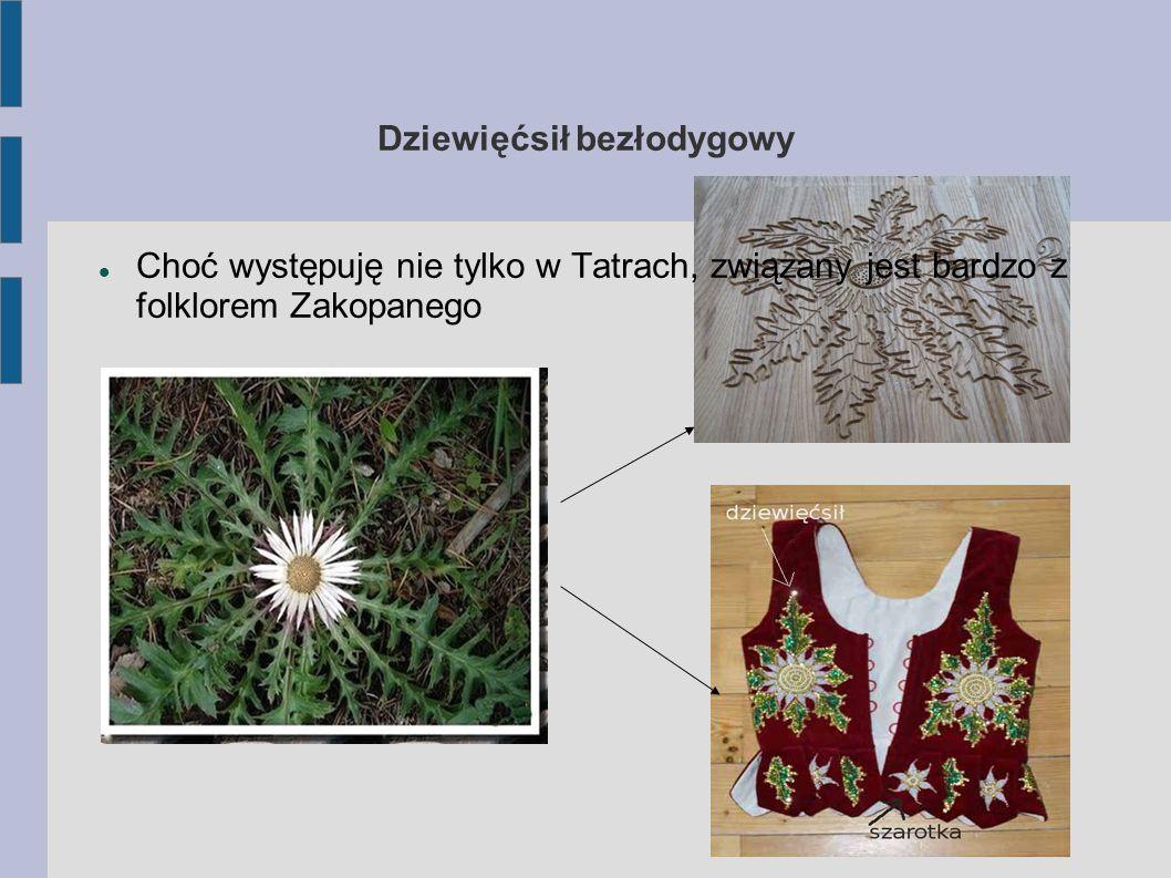 SZAFRAN SPISKI - KROKUS Roślina występuje głównie w reglu dolnym i górnym, rzadziej w piętrze kosówki.Przypuszcza się, że nieświadomie sprowadzili ją