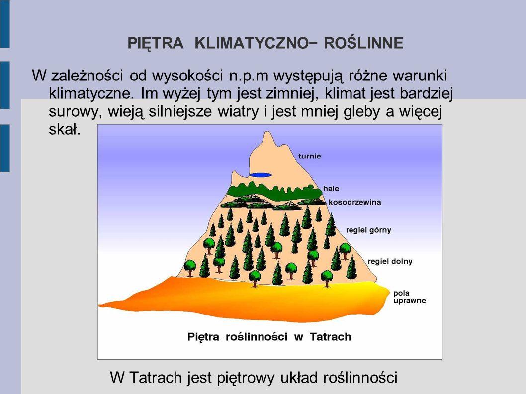 ROŚLINNOŚĆ GÓRSKA Tatry to jedyny w Polsce obszar o charakterze wysokogórskim. Dlatego roślinność tu występująca jest nieobecna w innych regionach nas