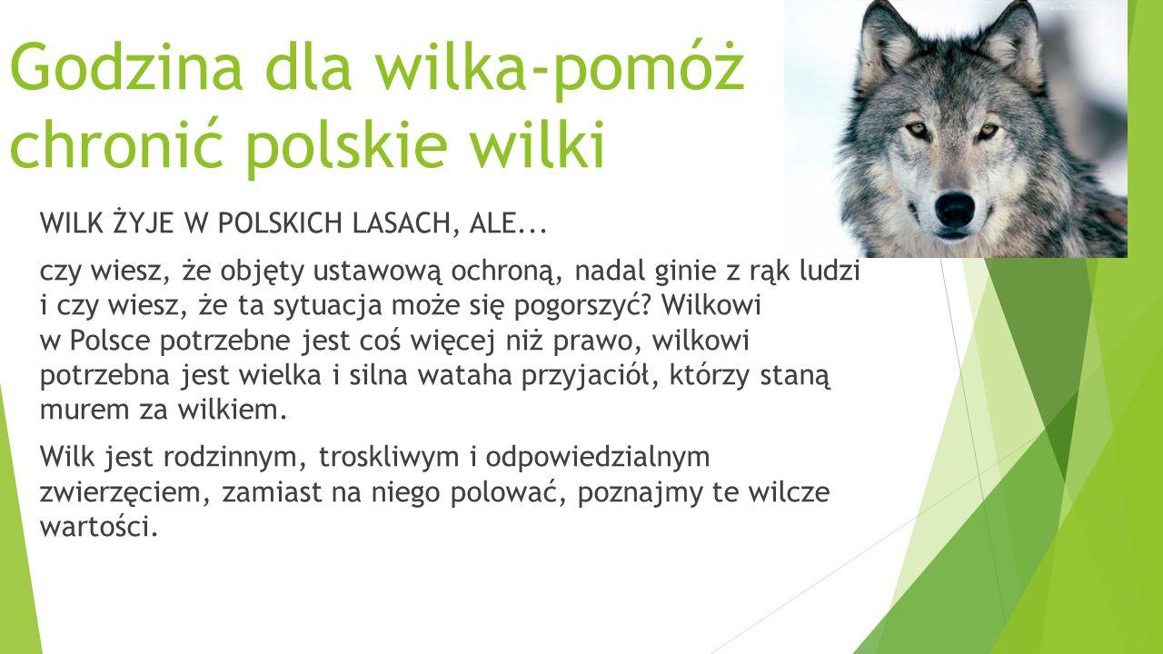 Godzina dla wilka-pomóż chronić polskie wilki WILK ŻYJE W POLSKICH LASACH, ALE...