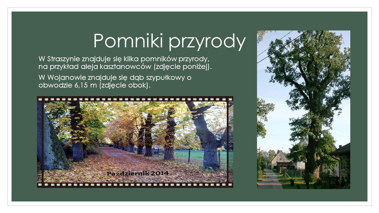 Pomniki przyrody W Straszynie znajduje się kilka pomników przyrody, na przykład aleja kasztanowców (zdjęcie poniżej).