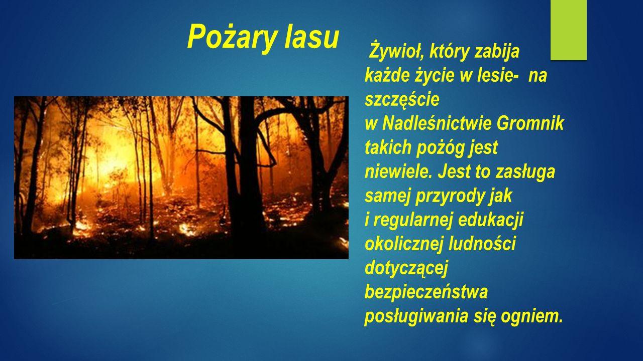 Żywioł, który zabija każde życie w lesie- na szczęście w Nadleśnictwie Gromnik takich pożóg jest niewiele.