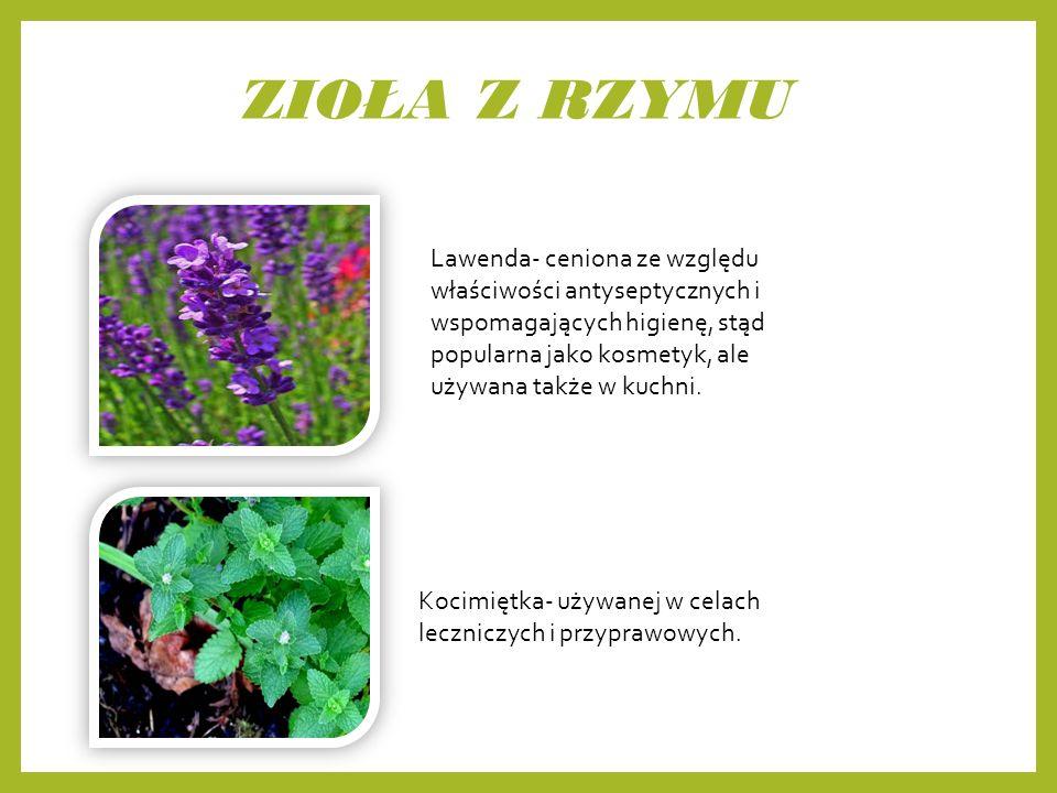 ZIOŁA Z RZYMU Lawenda- ceniona ze względu właściwości antyseptycznych i wspomagających higienę, stąd popularna jako kosmetyk, ale używana także w kuchni.