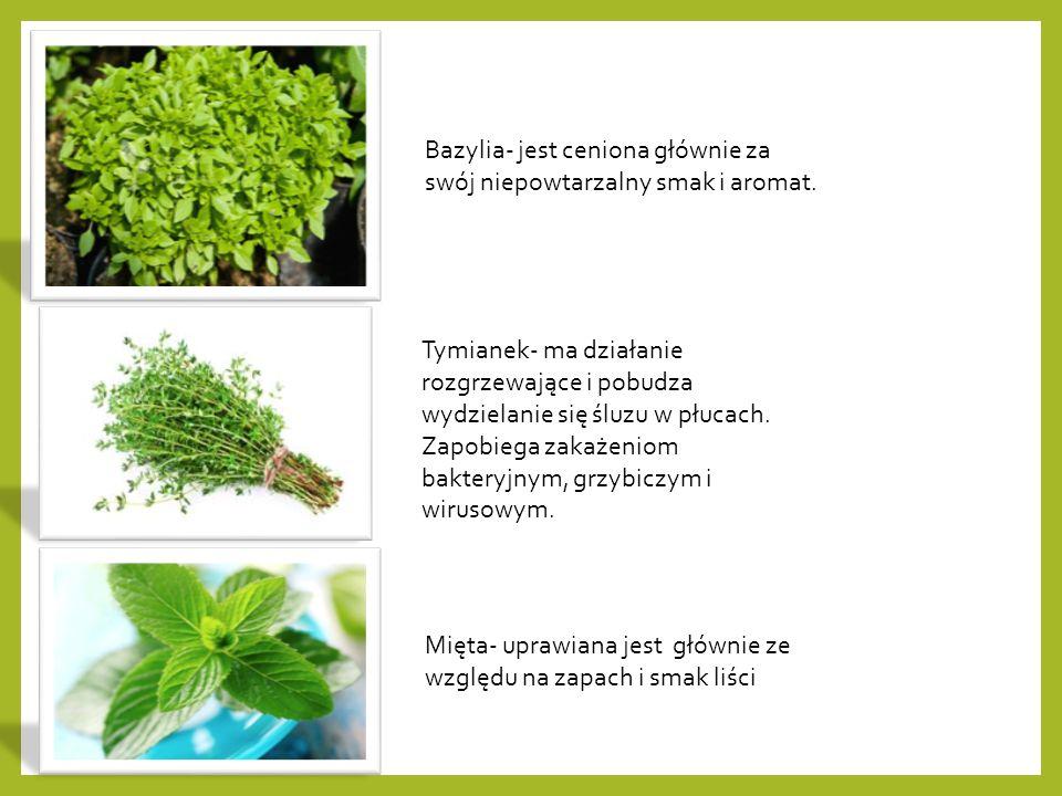 Bazylia- jest ceniona głównie za swój niepowtarzalny smak i aromat.
