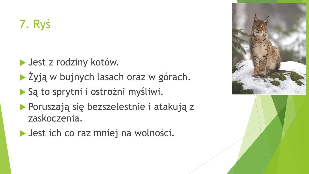 7. Ryś  Jest z rodziny kotów.  Żyją w bujnych lasach oraz w górach.