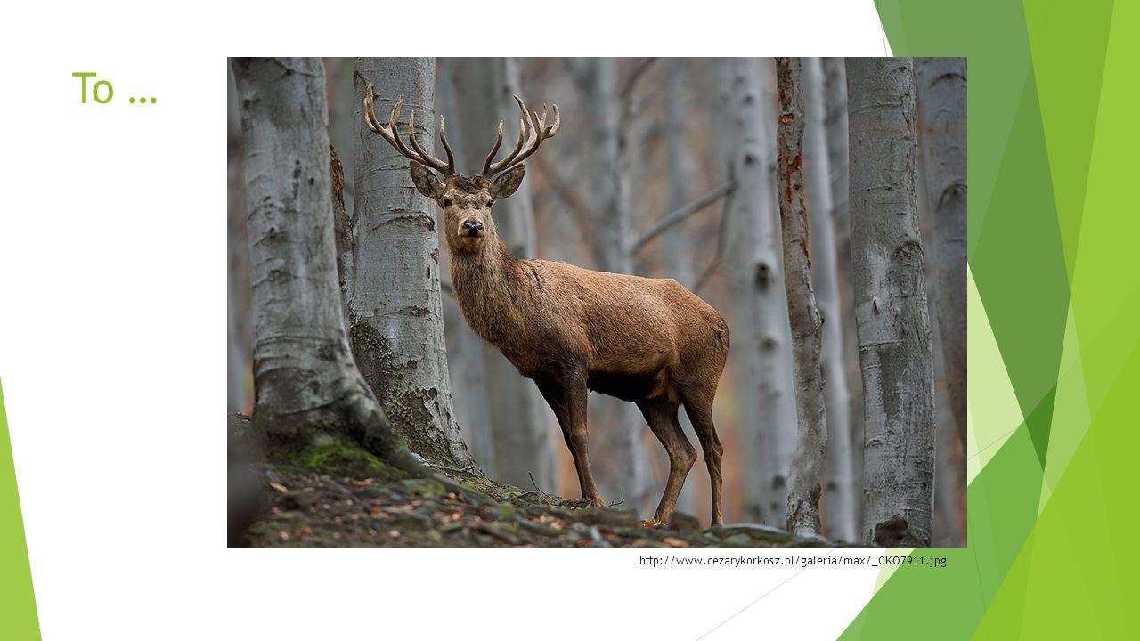 1.Jeleń  Żyje w lasach liściastych.  Ma poroże.