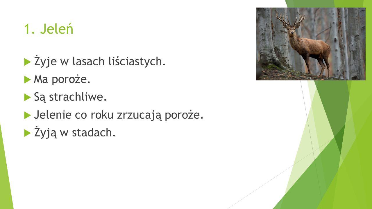 1. Jeleń  Żyje w lasach liściastych.  Ma poroże.