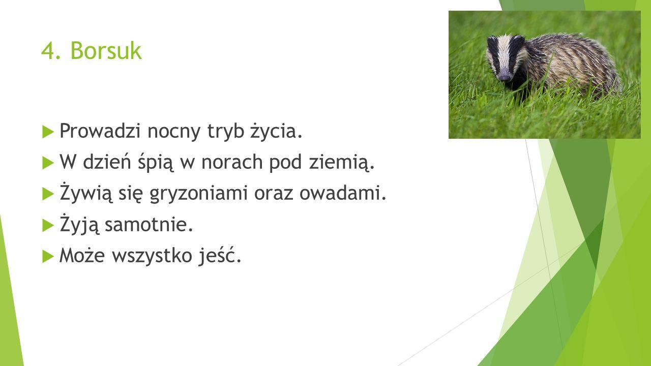 4. Borsuk  Prowadzi nocny tryb życia.  W dzień śpią w norach pod ziemią.